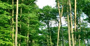 Las szkółka drzew leśnych